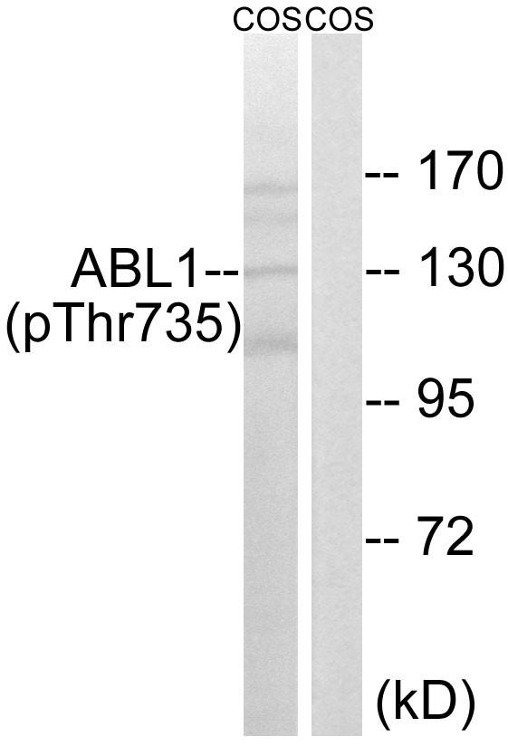 Abl1 (phosphor Thr735) Rabbit pAb